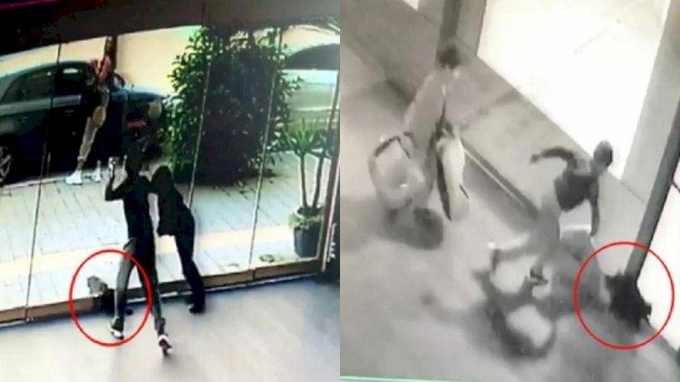 İzmir'de çocuk dehşeti... Kediyi ölene kadar dövdüler