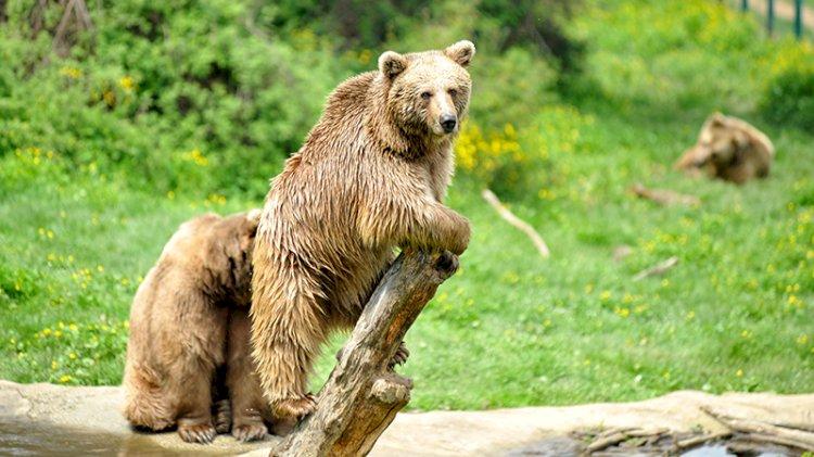 Burası da ayı barınağı
