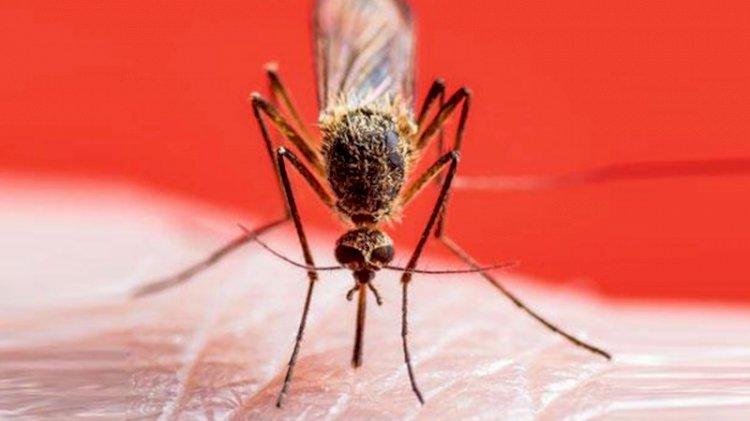 Bilimin başarısı: Ölümcül hastalığı sivrisinekle yendiler