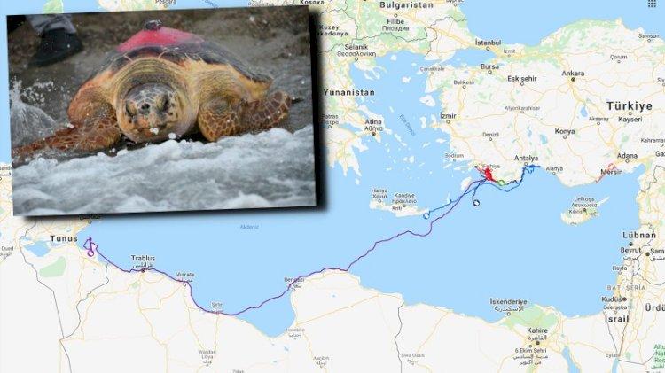 'Likya' 296 günlük yolculuk sonunda Tunus'a ulaştı