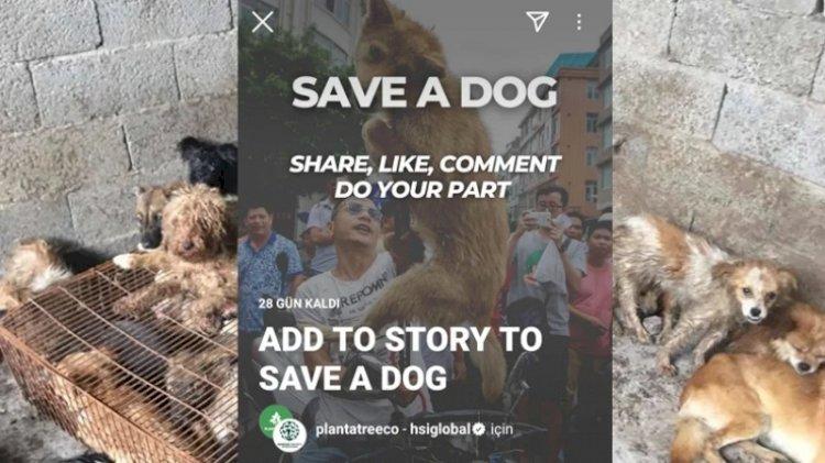 Köpeklere yönelik Instagram'da başlatılan kampanyanın sahte olduğu anlaşıldı