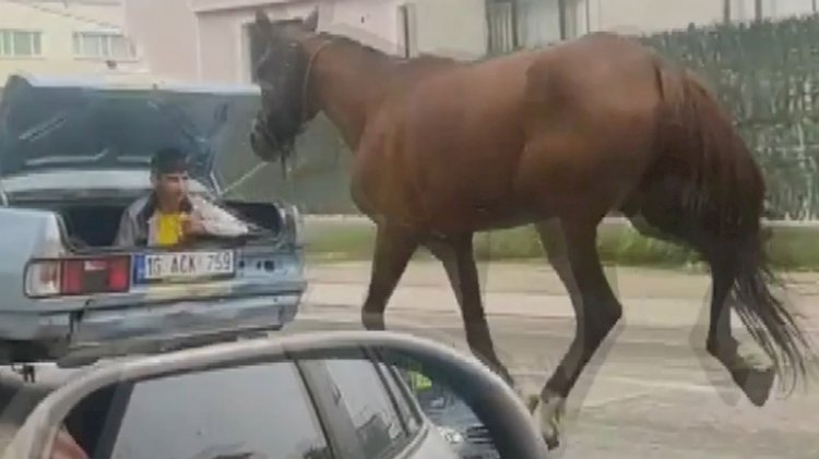 Atı iple bağlayıp arabanın arkasında koşturdular