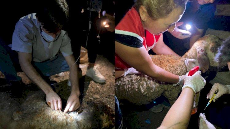 Veteriner hekimler ve hayvanseverler, yangın mağduru hayvanlar için seferber oldu