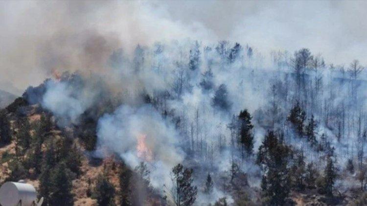 KKTC'de de orman yangını