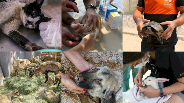 Manavgat'ta yangından etkilenen hayvanlar için Türkiye'nin ilk sahra hastanesi kuruldu