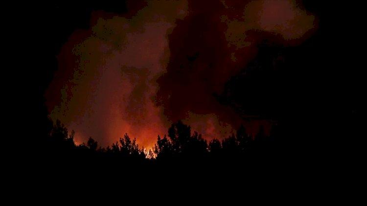 Muğla'nın Menteşe ilçesinde orman yangını çıktı