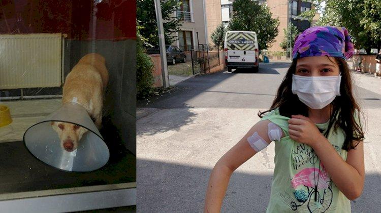 Emekli polis, köpeğe mermi yağdırdı, seken mermi 10 yaşındaki çocuğa isabet etti
