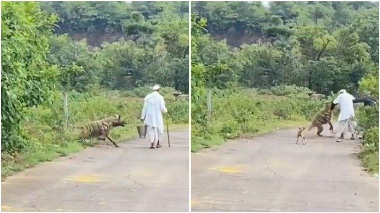 Yolda yürüyen adama sırtlan saldırdı