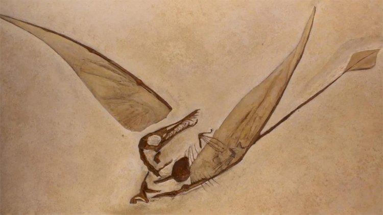Bilim insanları, Şili'de 'Uçan Ejderha'ya ait kanıtlar buldu