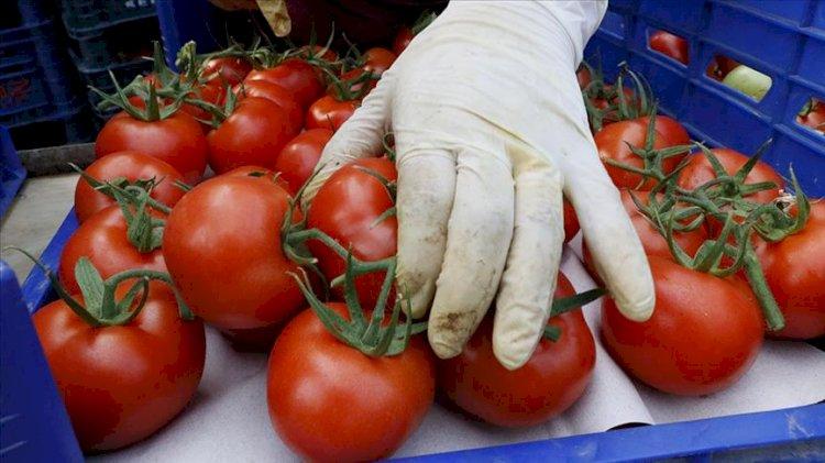Rusya'dan Türkiye'den alınan domateslerle ilgili açıklama