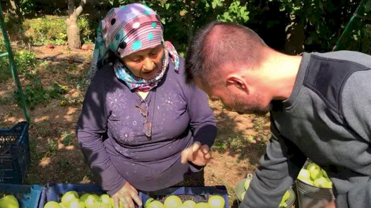 Elma üreticileri isyanda: Cumhurbaşkanı gelsin görsün... Toprakta tüccar var, devlet yok!